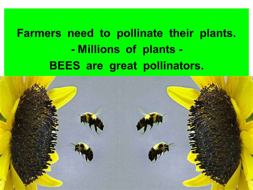 Farmers need to pollinate their plants. BEES are great pollinators.