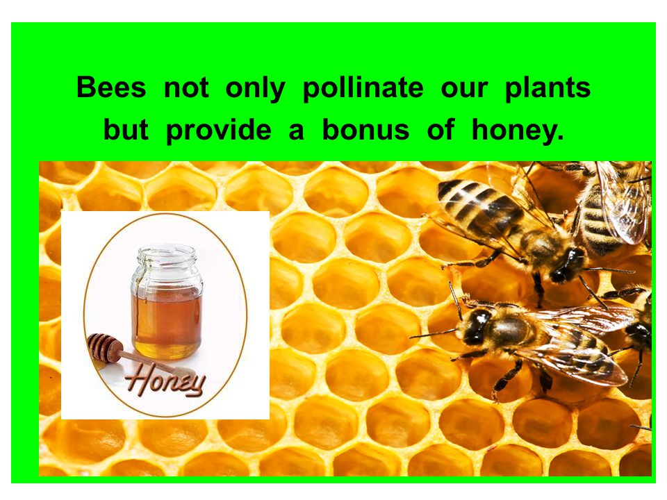 Bees not only pollinate our plants but provide a bonus of honey.