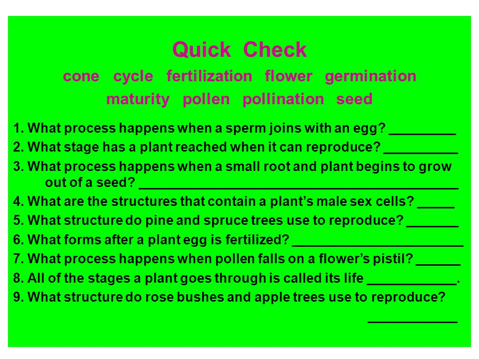 Quick Check cone cycle fertilization flower germination