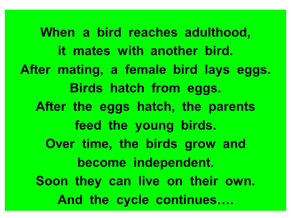 When a bird reaches adulthood, it mates with another bird.