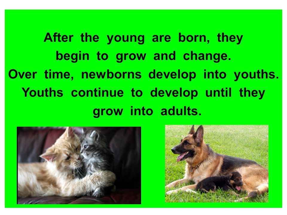 After the young are born, they begin to grow and change.
