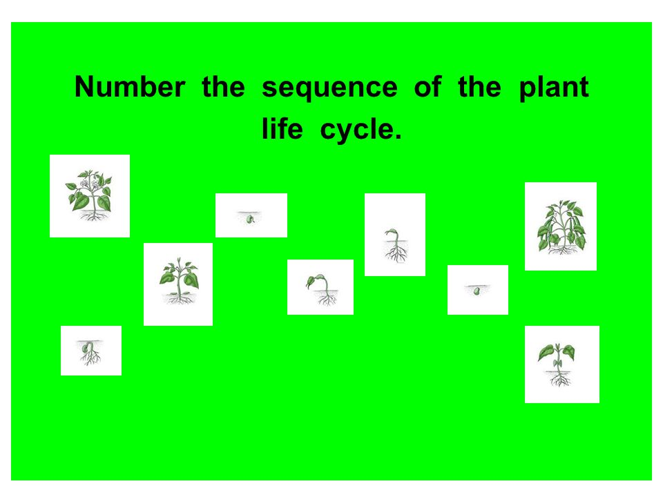 Number the sequence of the plant