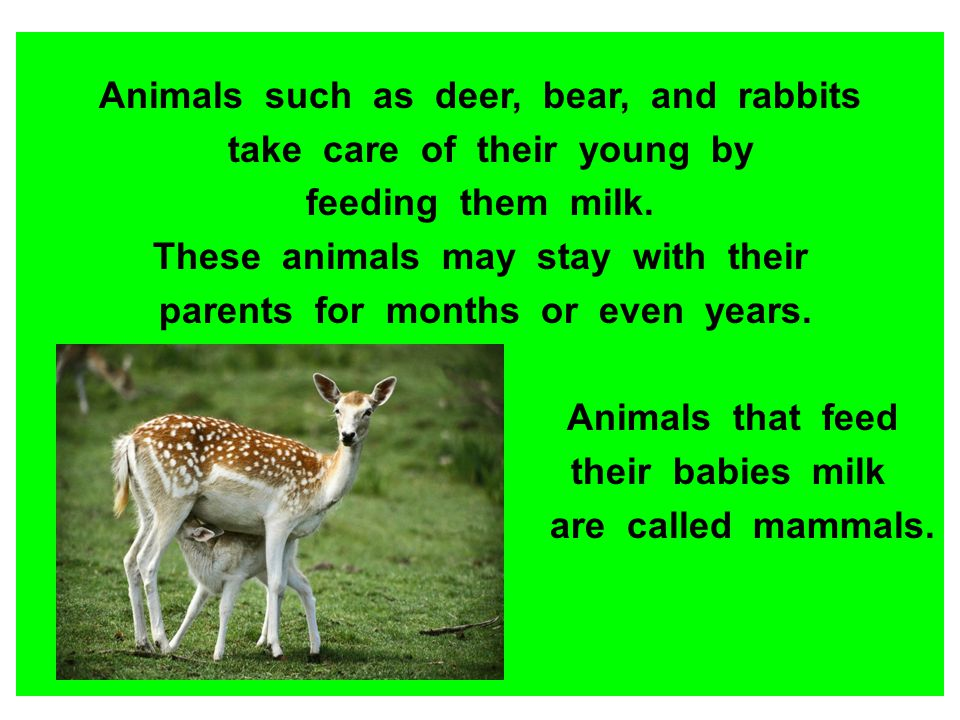 Animals such as deer, bear, and rabbits take care of their young by