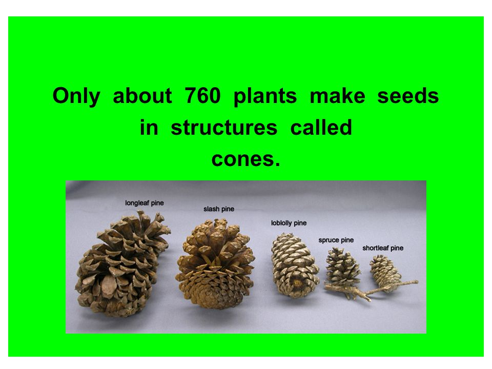 Only about 760 plants make seeds