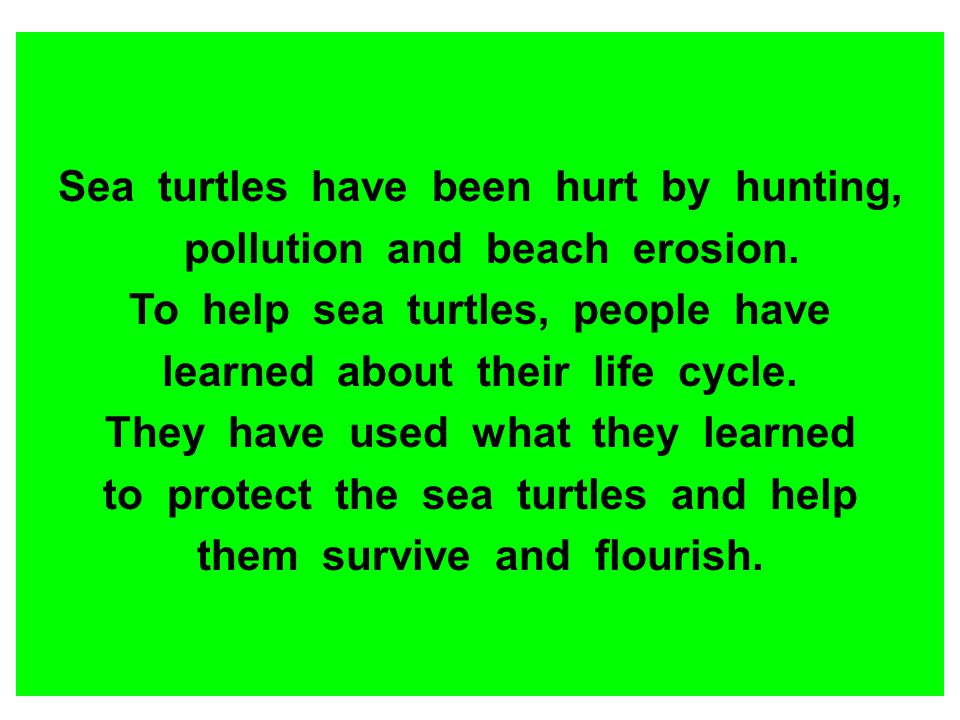 Sea turtles have been hurt by hunting, pollution and beach erosion.