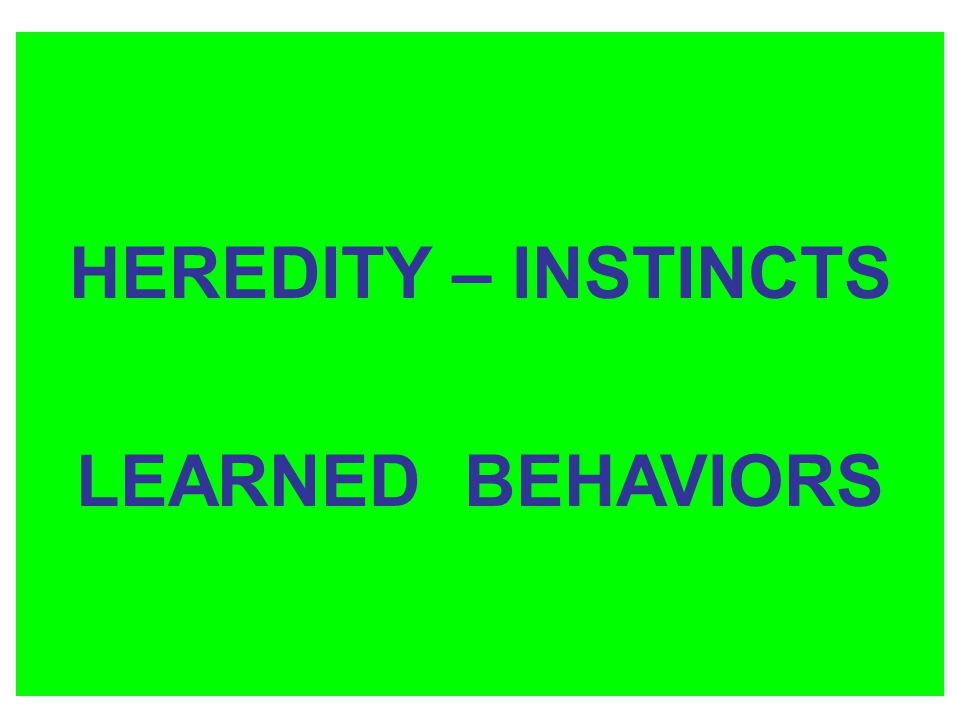 HEREDITY – INSTINCTS LEARNED BEHAVIORS