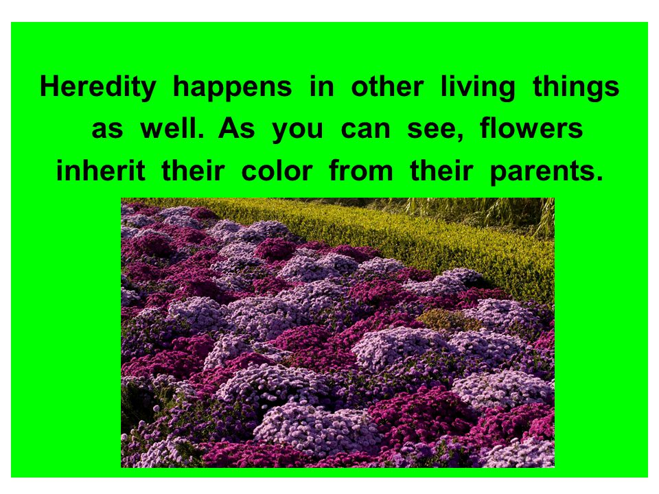 Heredity happens in other living things