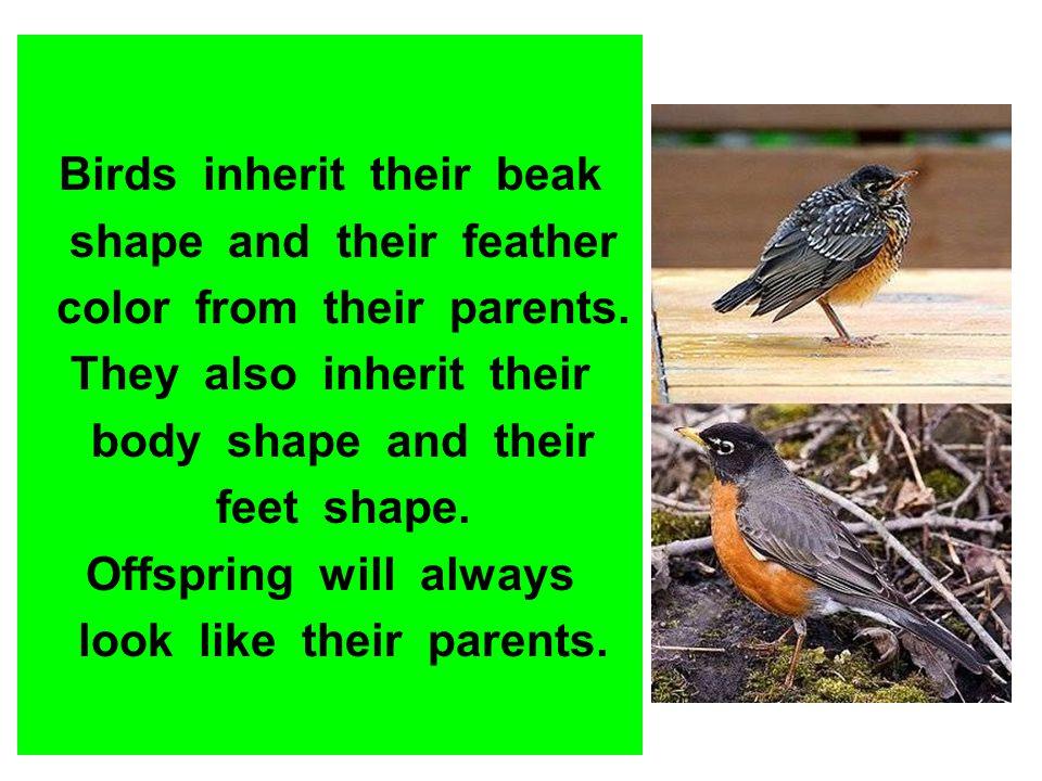 Birds inherit their beak shape and their feather