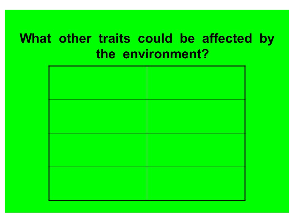 What other traits could be affected by the environment
