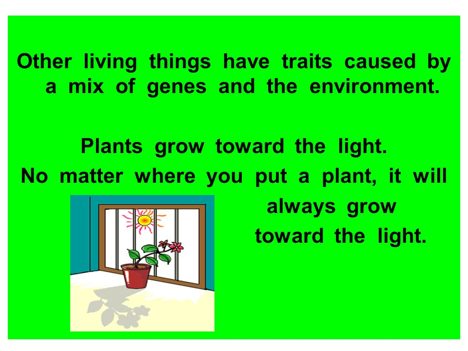 Plants grow toward the light. No matter where you put a plant, it will