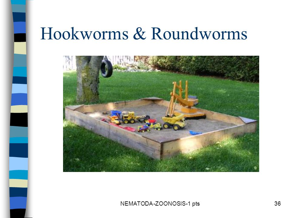 Hookworms & Roundworms