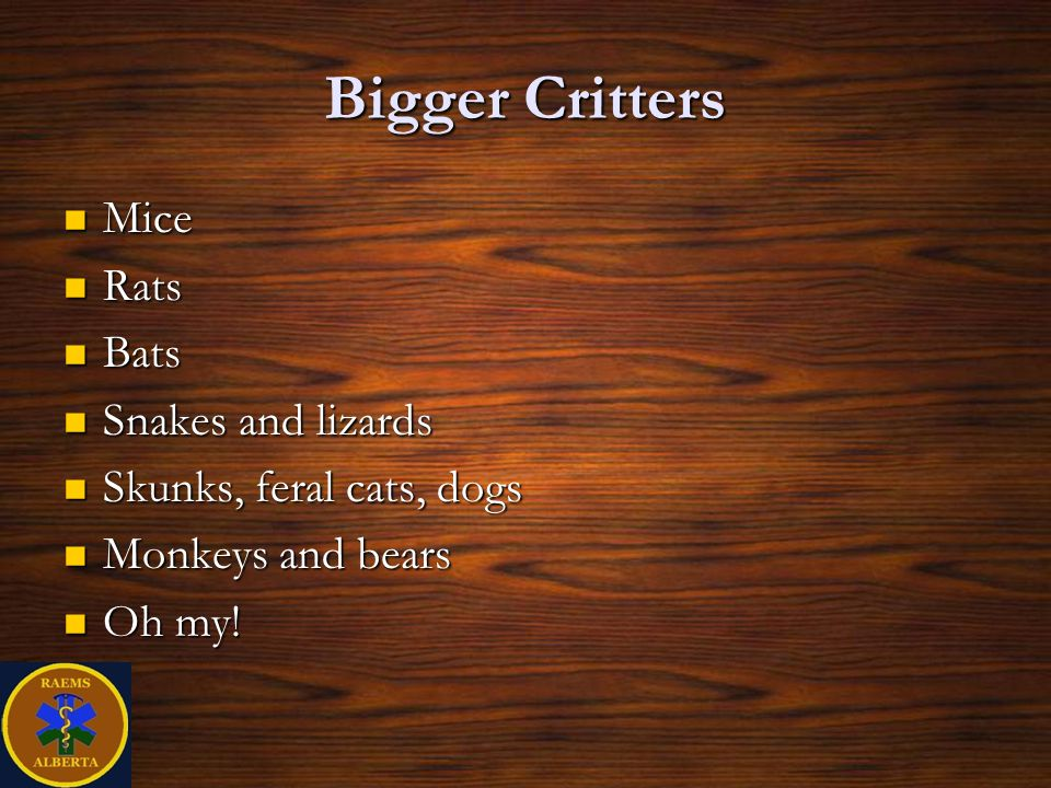 Bigger Critters Mice Rats Bats Snakes and lizards