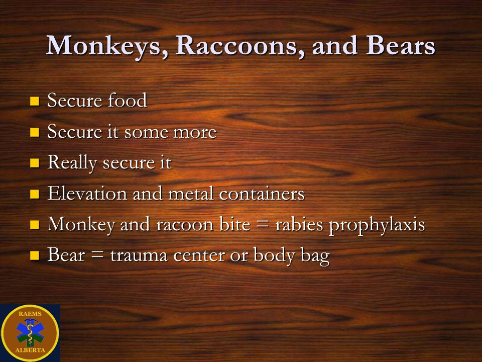Monkeys, Raccoons, and Bears