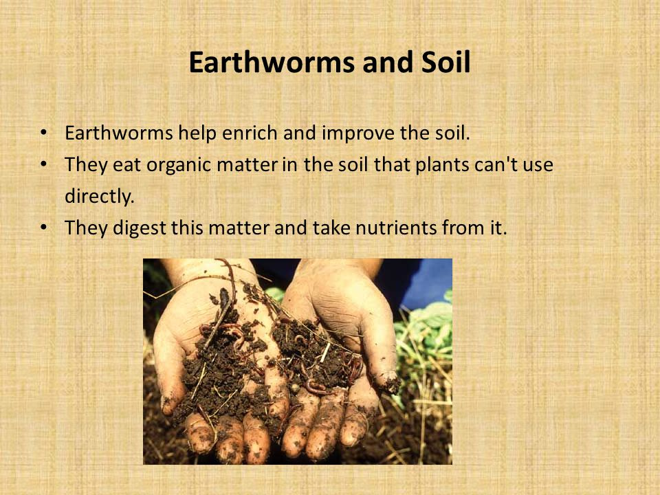 Earthworms and Soil Earthworms help enrich and improve the soil.