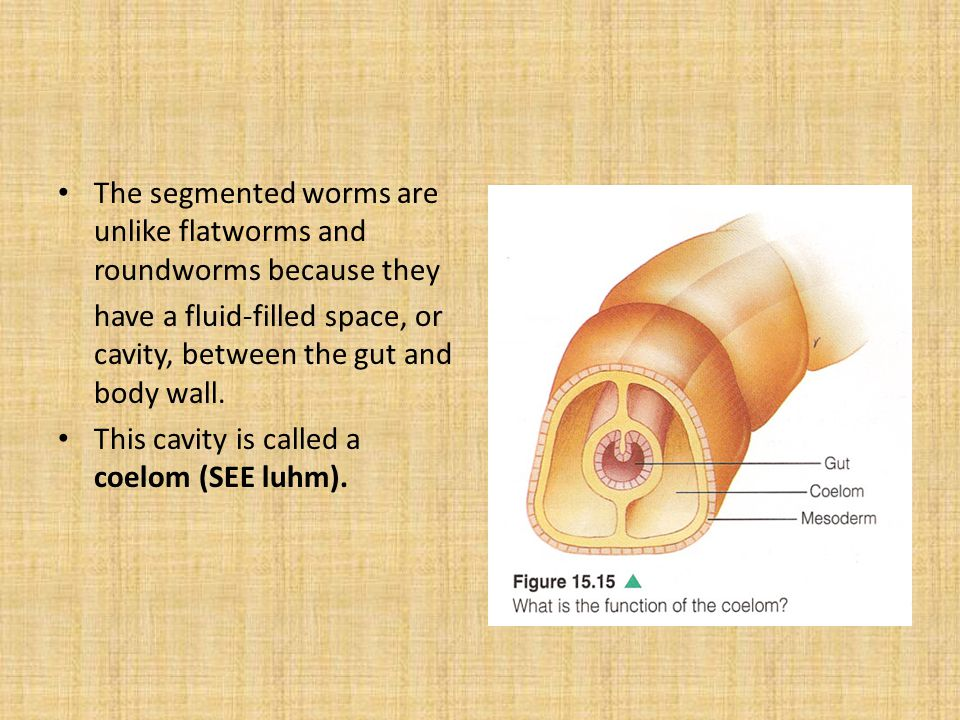 The segmented worms are unlike flatworms and roundworms because they