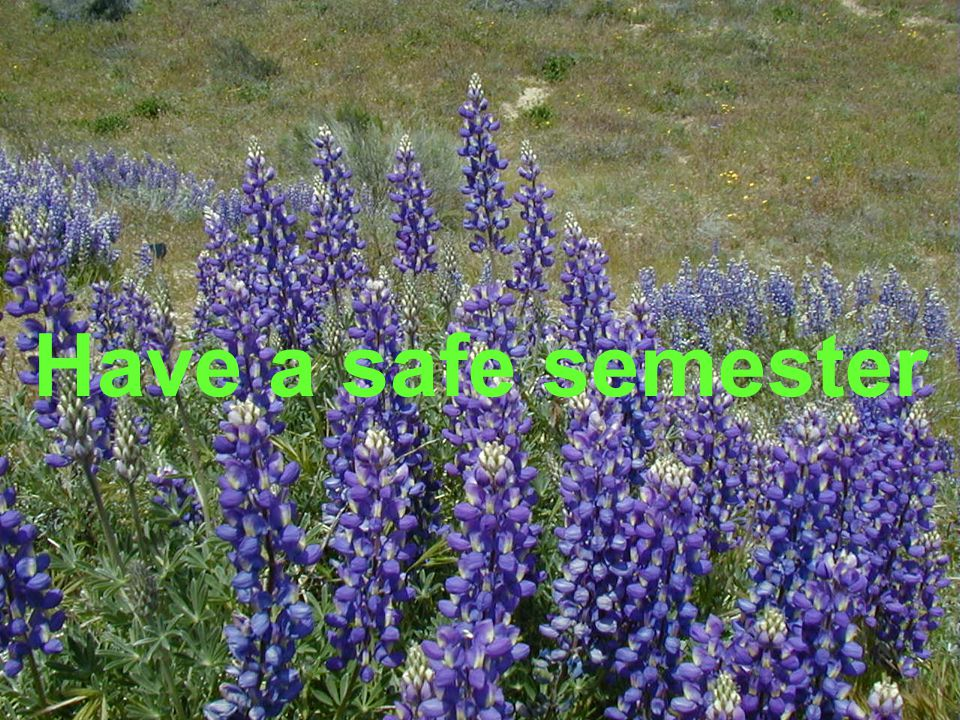 Have a safe semester http://www.clker.com/clipart-15896.html