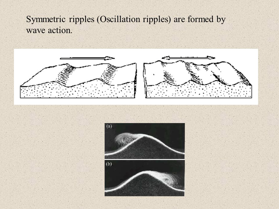 Symmetric ripples (Oscillation ripples) are formed by wave action.