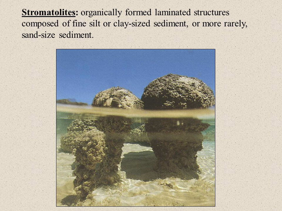 Stromatolites: organically formed laminated structures composed of fine silt or clay-sized sediment, or more rarely, sand-size sediment.