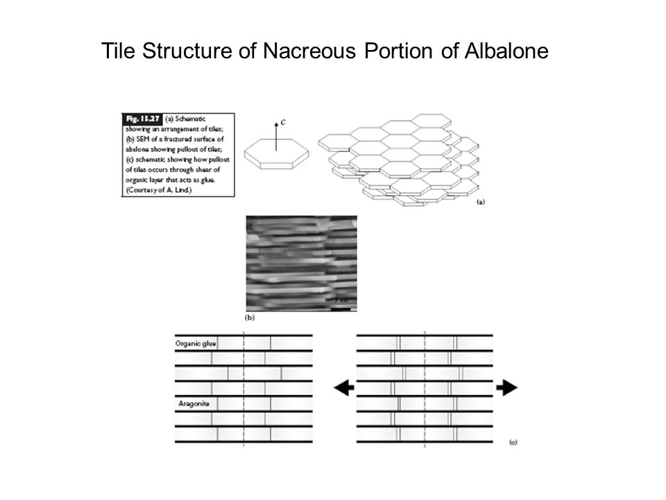 Tile Structure of Nacreous Portion of Albalone