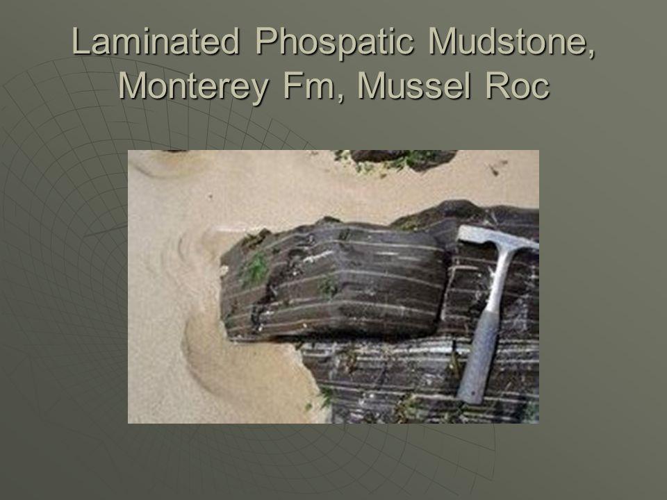 Laminated Phospatic Mudstone, Monterey Fm, Mussel Roc