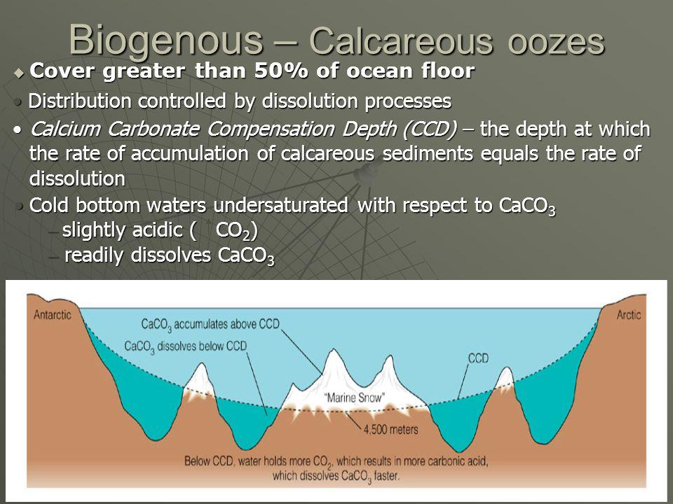 Biogenous – Calcareous oozes