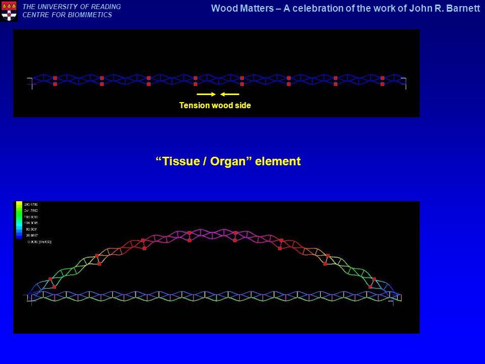 Tissue / Organ element