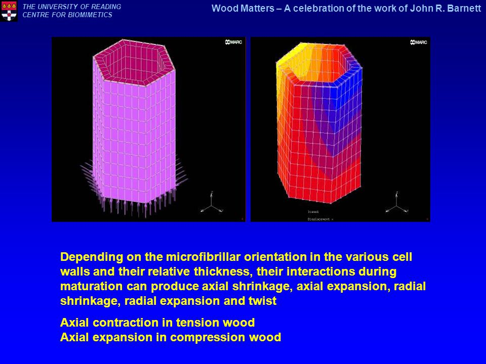 Axial contraction in tension wood Axial expansion in compression wood