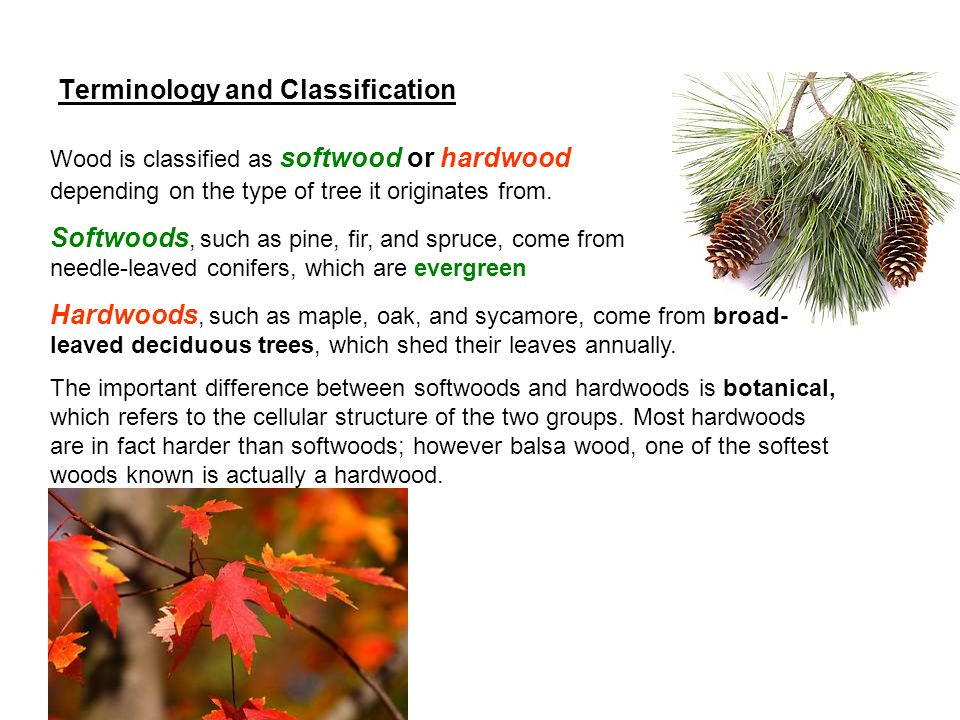 Terminology and Classification