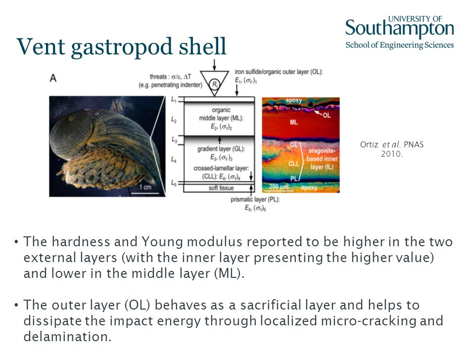 Vent gastropod shell Ortiz et al. PNAS 2010.