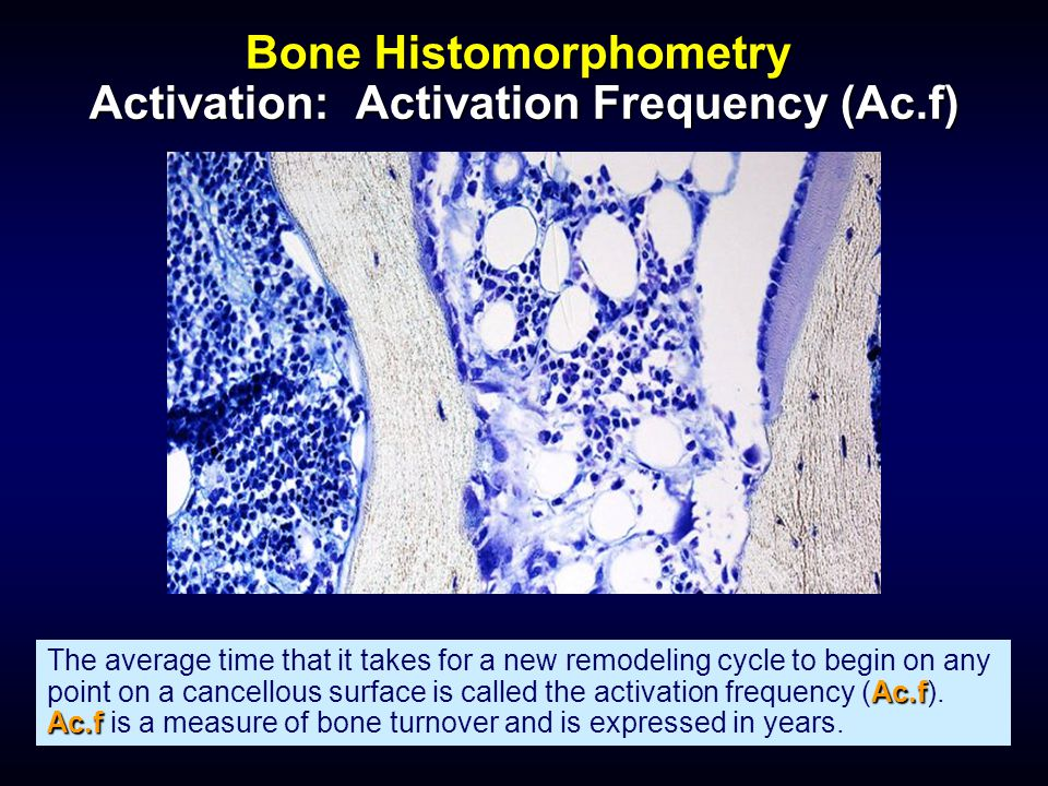 Bone Histomorphometry Activation: Activation Frequency (Ac.f)
