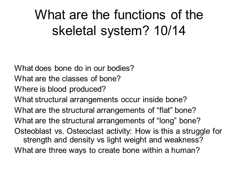 What are the functions of the skeletal system 10/14
