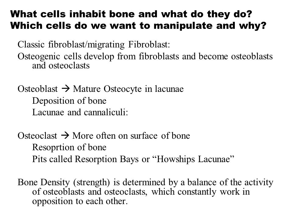 What cells inhabit bone and what do they do