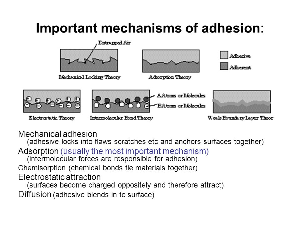 Important mechanisms of adhesion: