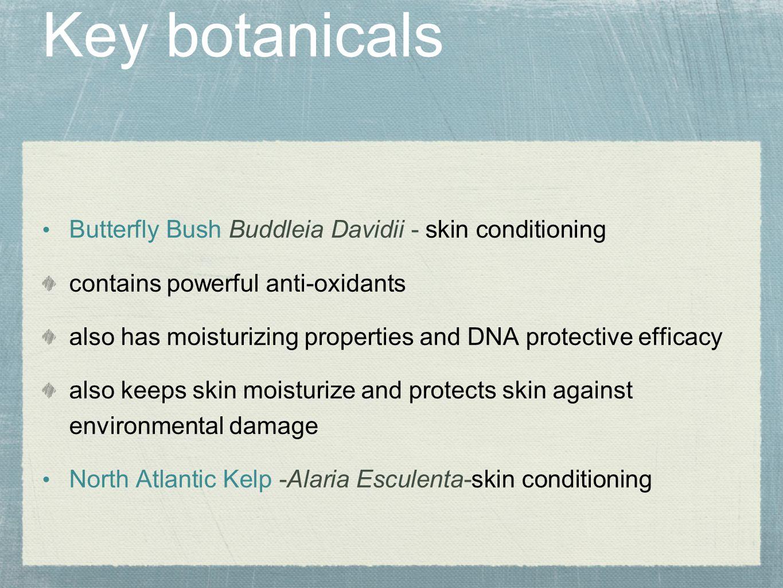 Key botanicals Butterfly Bush Buddleia Davidii - skin conditioning