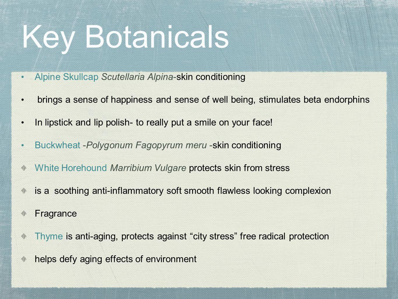 Key Botanicals Alpine Skullcap Scutellaria Alpina-skin conditioning