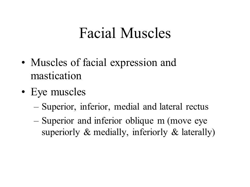 Facial Muscles Muscles of facial expression and mastication