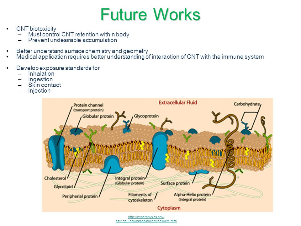Future Works CNT biotoxicity Must control CNT retention within body