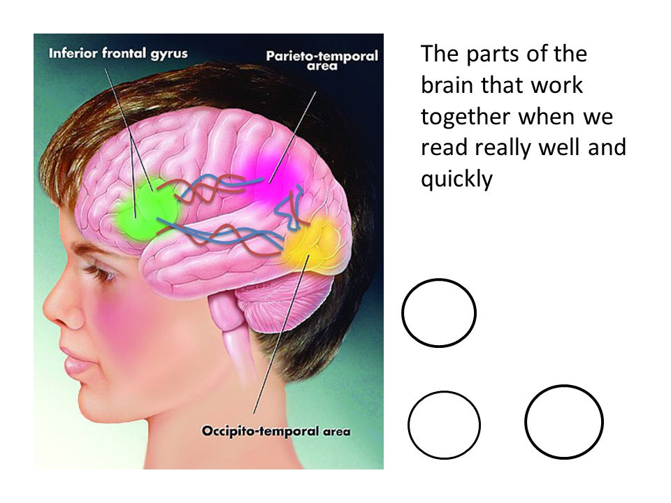 The parts of the brain that work together when we read really well and quickly