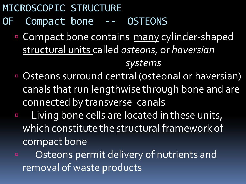 MICROSCOPIC STRUCTURE OF Compact bone -- OSTEONS