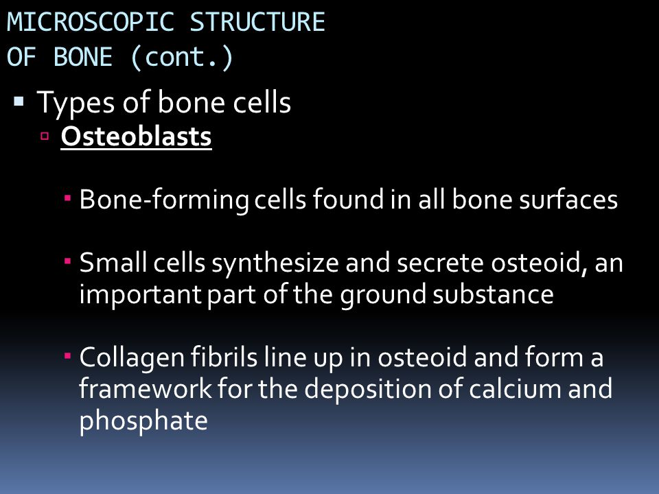 MICROSCOPIC STRUCTURE OF BONE (cont.)