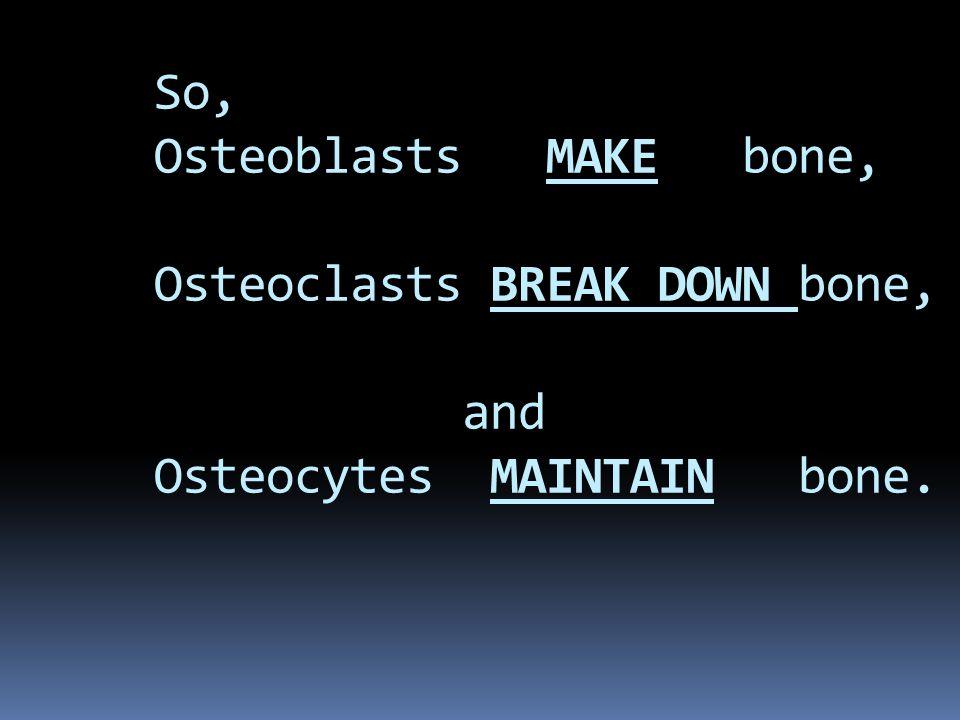 So, Osteoblasts MAKE bone, Osteoclasts BREAK DOWN bone, and Osteocytes MAINTAIN bone.