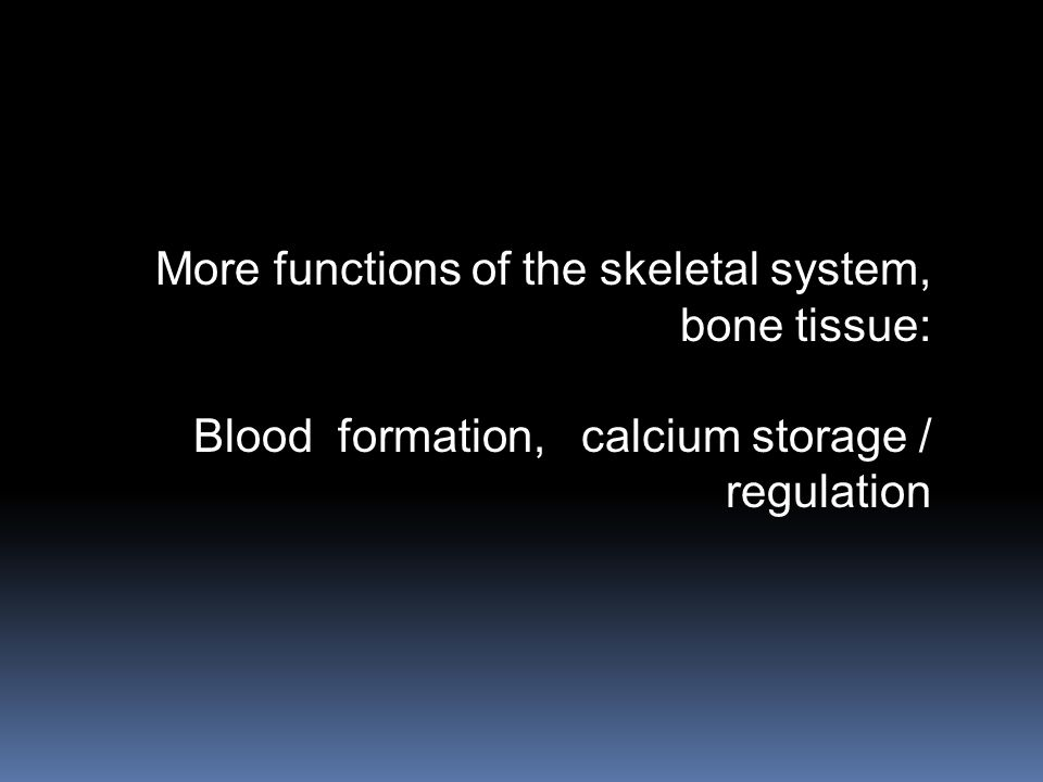 More functions of the skeletal system,