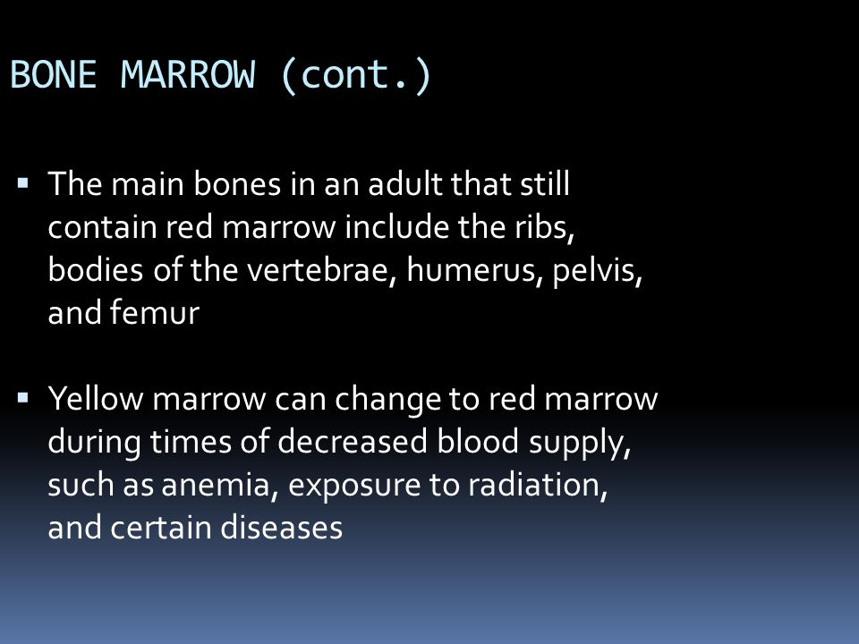 BONE MARROW (cont.) The main bones in an adult that still contain red marrow include the ribs, bodies of the vertebrae, humerus, pelvis, and femur.