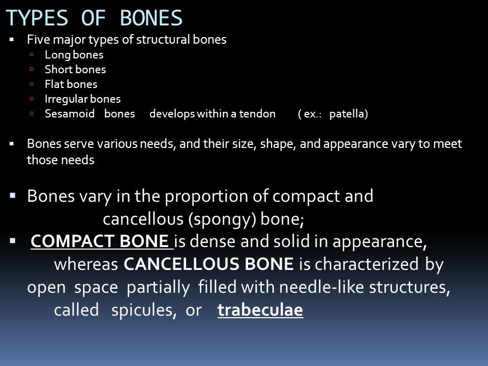 TYPES OF BONES Five major types of structural bones. Long bones. Short bones. Flat bones. Irregular bones.