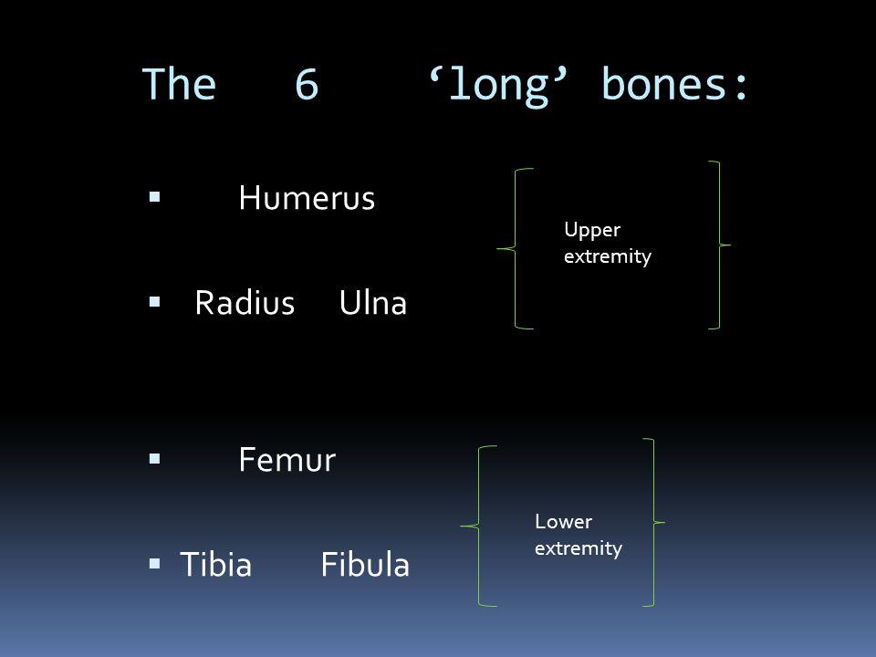 The 6 'long' bones: Humerus Radius Ulna Femur Tibia Fibula Upper