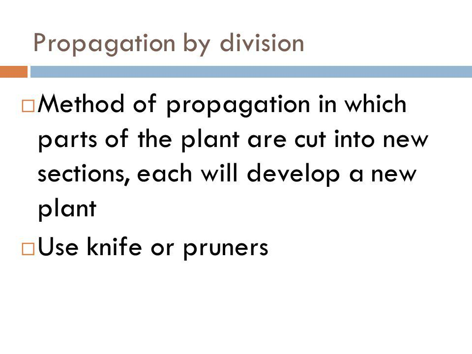 Propagation by division