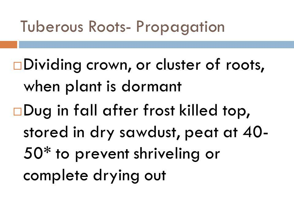 Tuberous Roots- Propagation