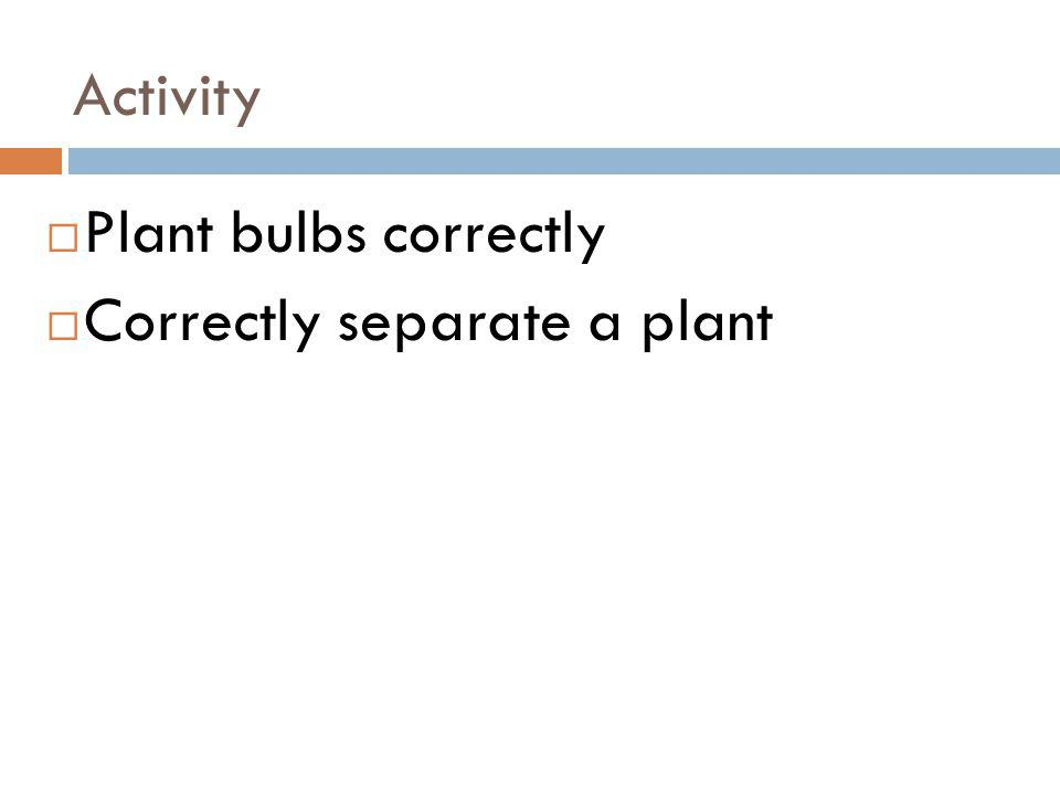Activity Plant bulbs correctly Correctly separate a plant