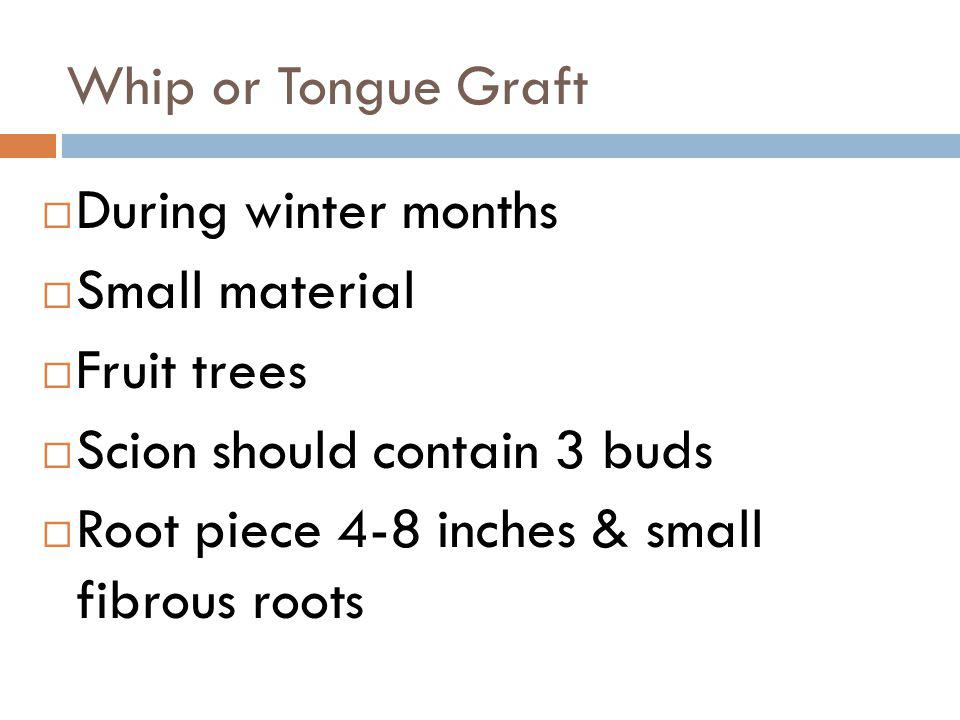 Whip or Tongue Graft During winter months. Small material. Fruit trees. Scion should contain 3 buds.