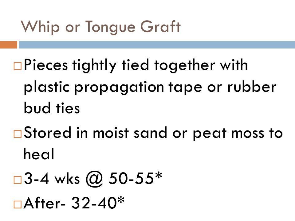 Whip or Tongue Graft Pieces tightly tied together with plastic propagation tape or rubber bud ties.